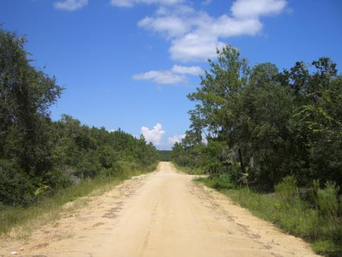 Dirt Road mitten in Floridas Ocala National Forest