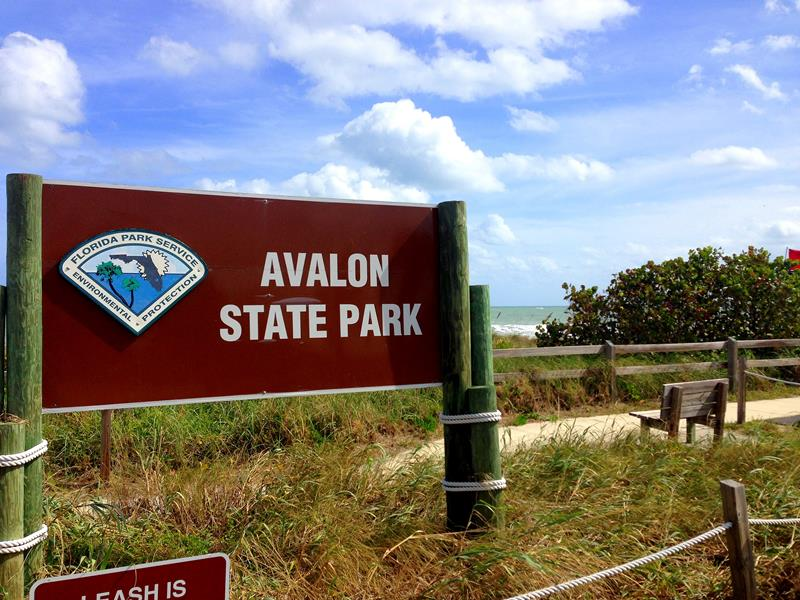 Der Avalon State Park auf North Hutchinson Island