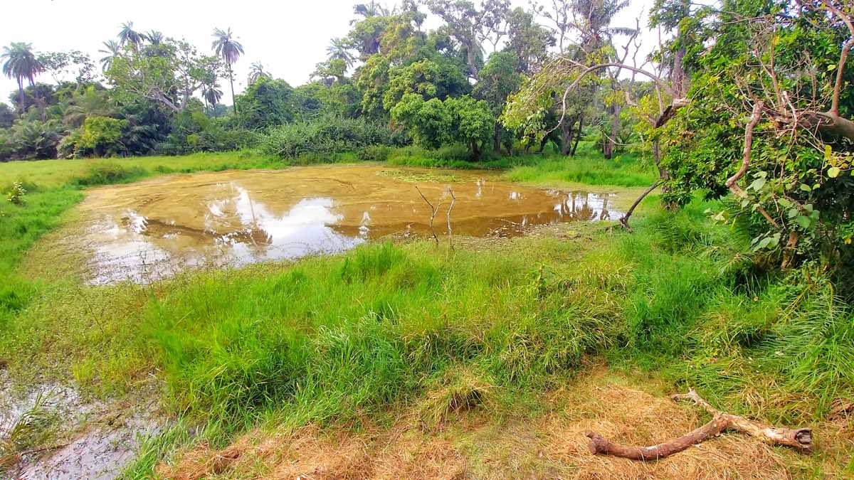 Tour durch das Abuko Nature Reserve in Gambia