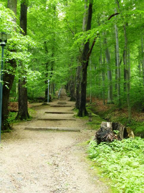 Der Weg zur Landeskrone, dem Hausberg von Görlitz