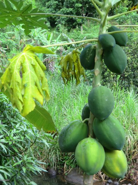 Auf dem Weg zu den Concord Falls in Grenada