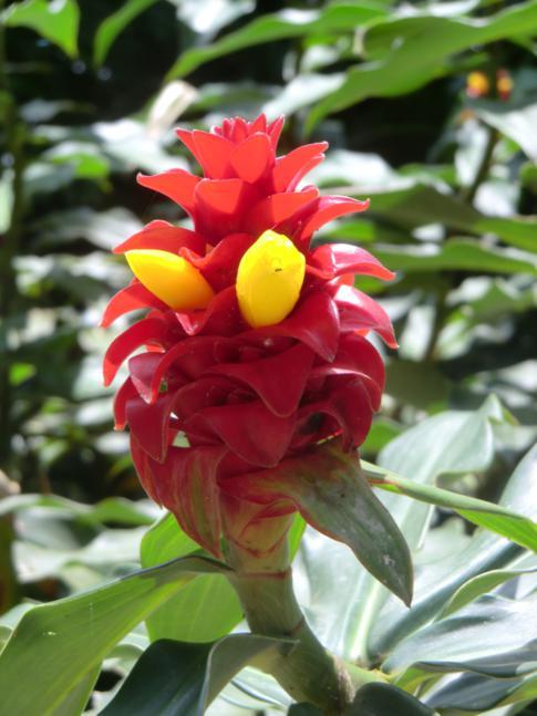 Interessante Pflanzen im Grand Etang National Park