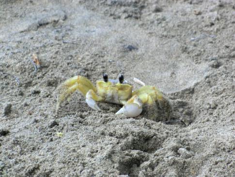 Kleines Getier am Strand von La Sagesse