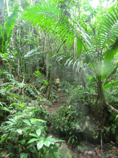 Verlauf des Hashs durch den Grand Etang National Park in Grenada