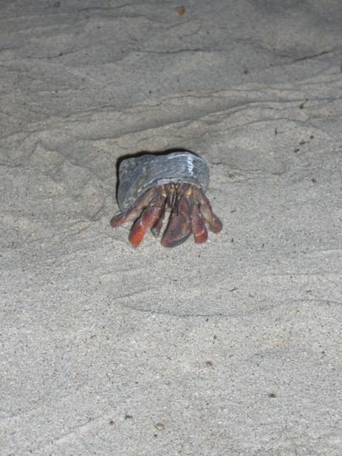 Das Crab Race im Flamboyant Hotel am Grand Anse in Grenada