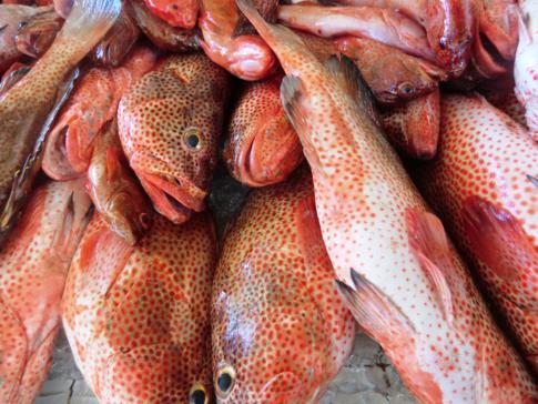 Red Snapper auf dem Fischmarkt von St. George's
