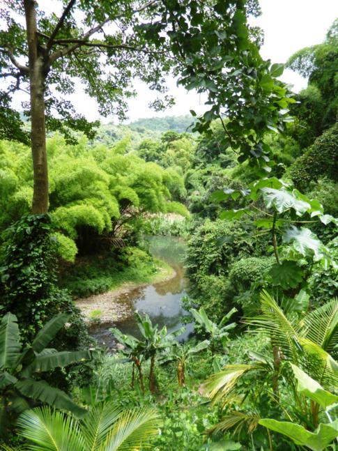 Einer der zahlreichen idyllischen Flussläufe in Grenada