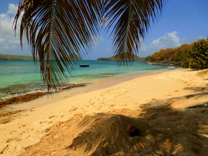 Karibik pur: Palmen, türkisblaues Wasser, traumhafter Strand