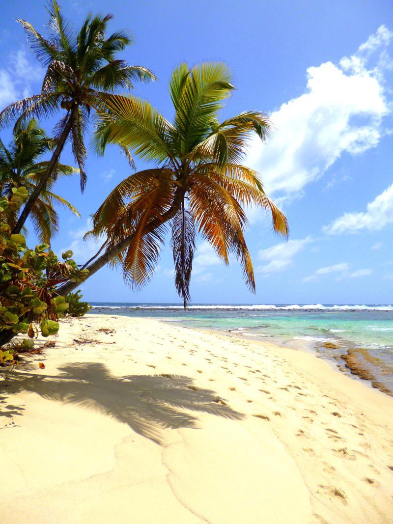 Karibik pur auf Sandy Island: Palmen, türkisblaues Wasser, traumhafter Strand