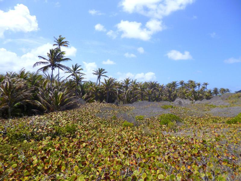 Dichter Bewuchs auf Sandy Island