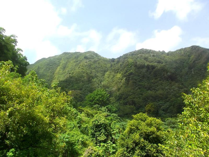 Tufton Hall Waterfall – Grenadas schönster Wasserfall