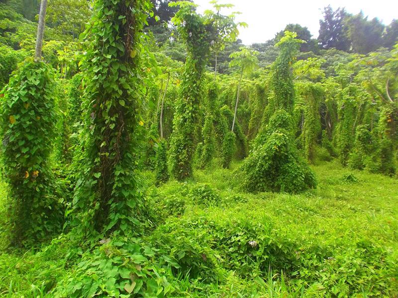 Wanderung zum Tufton Hall Wasserfall auf der Karibik-Insel Grenada