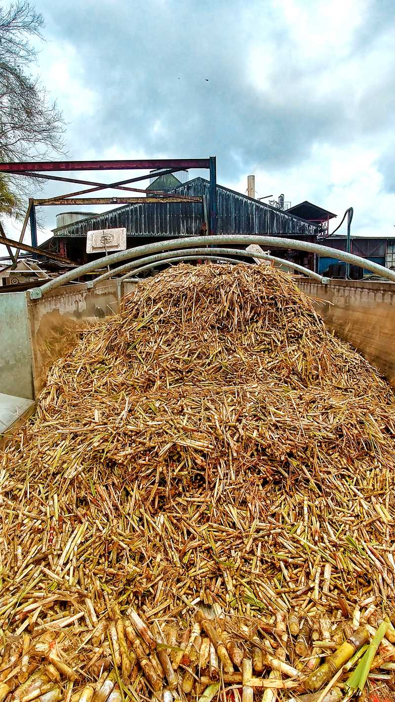 Die Destillerie Damoiseau auf Grande-Terre in Guadeloupe
