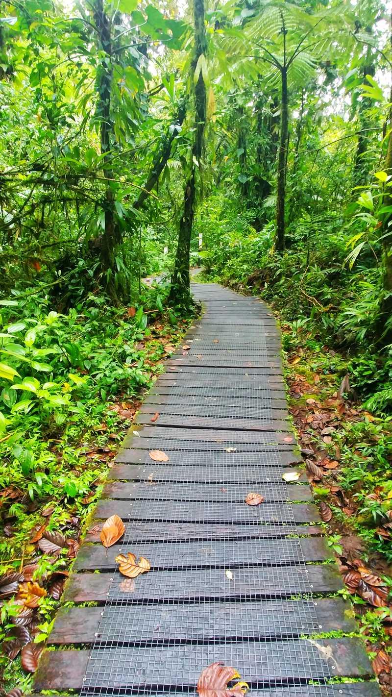 Wanderung zu den Chutes du Charbet auf Guadeloupe