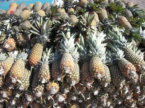 Frische Ladung Ananas im Hafen von Parika