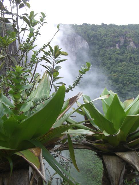 Natur und Ausblick neben den Kaieteur Falls