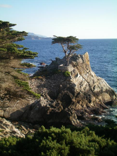 Der 17 Mile Drive in Pebble Beach: Der Lone Cypress