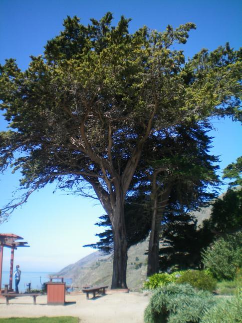 Der Highway No. 1 zwischen Big Sur und San Simeon: Ragged Point