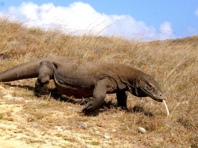 Die wunderschöne Insel Rinca, ebenfalls Teil des Komodo National Park und Lebensraum der Komodowarane