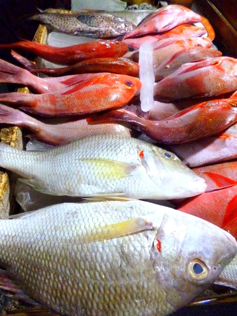 Der tolle und leckere Fischmarkt auf Kupang in Westtimor