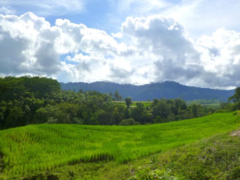 Grün und Grüner - ein klassisches Landschaftsbild in Sumatra