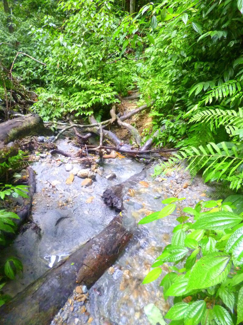 Der Gunung Leusser National Park - eine natürliche Perle auf Sumatra
