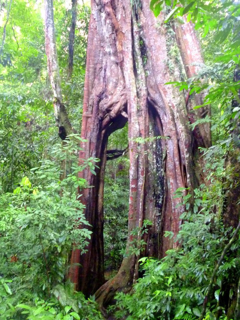 Der Gunung Leusser National Park - eines der Highlights auf Sumatra