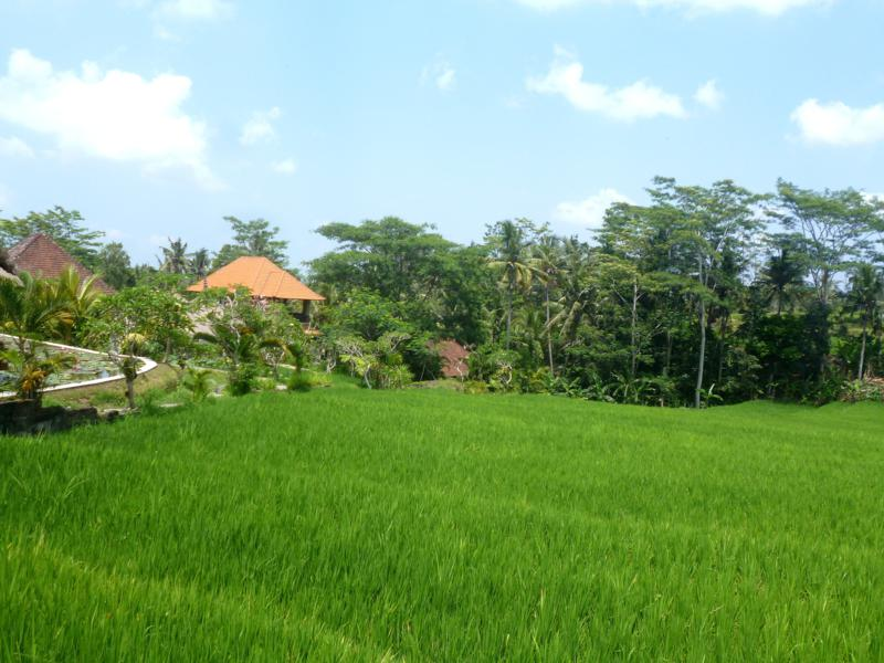 Die Reisterrassen von Bali während einer Fahrradtour über die Insel