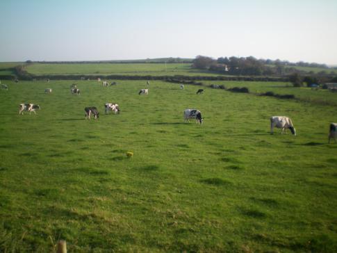 Blick auf die grünen Wiesen der Isle of Man während der Fahrt mit der Steam Railway