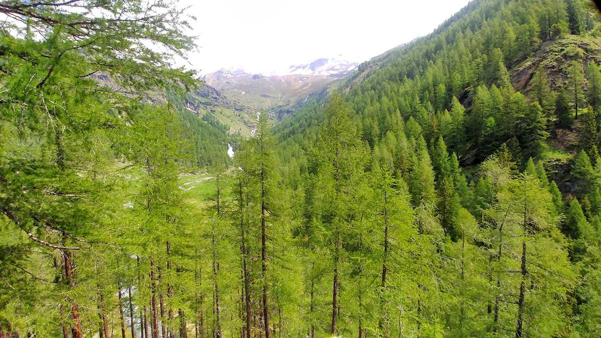 Blick im Val di Rabbi von Dos de la Cros auf den Gletscher