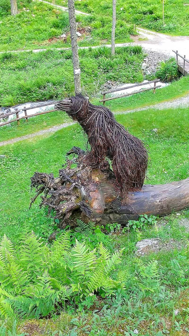 Der Bär im Val di Rabbi auf dem Weg zum Cascate Valorz