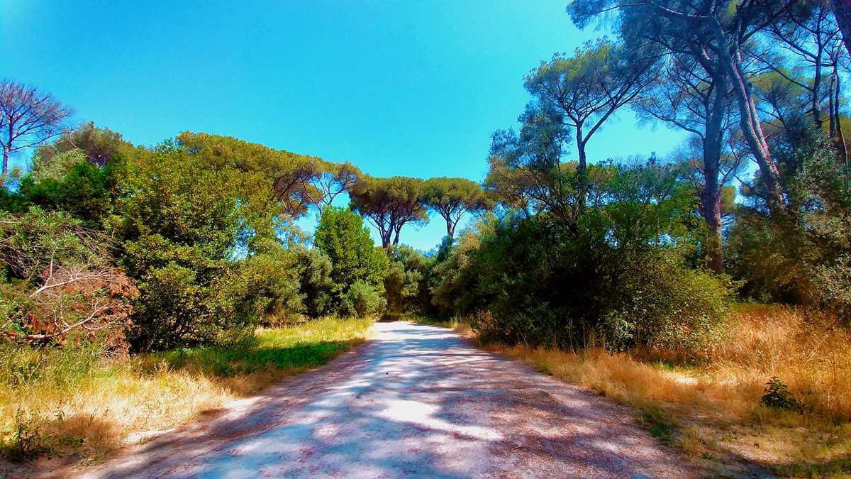 Der Park Ada Savoia, eine der Grünanlagen von Rom