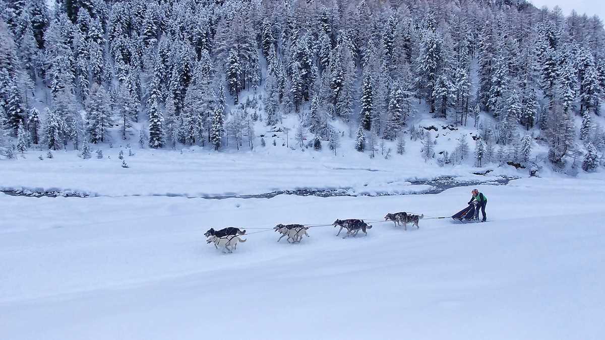 Traumhafte Winterlandschaft mit Hundeschlitten am Reschensee im Langtauferer Tal