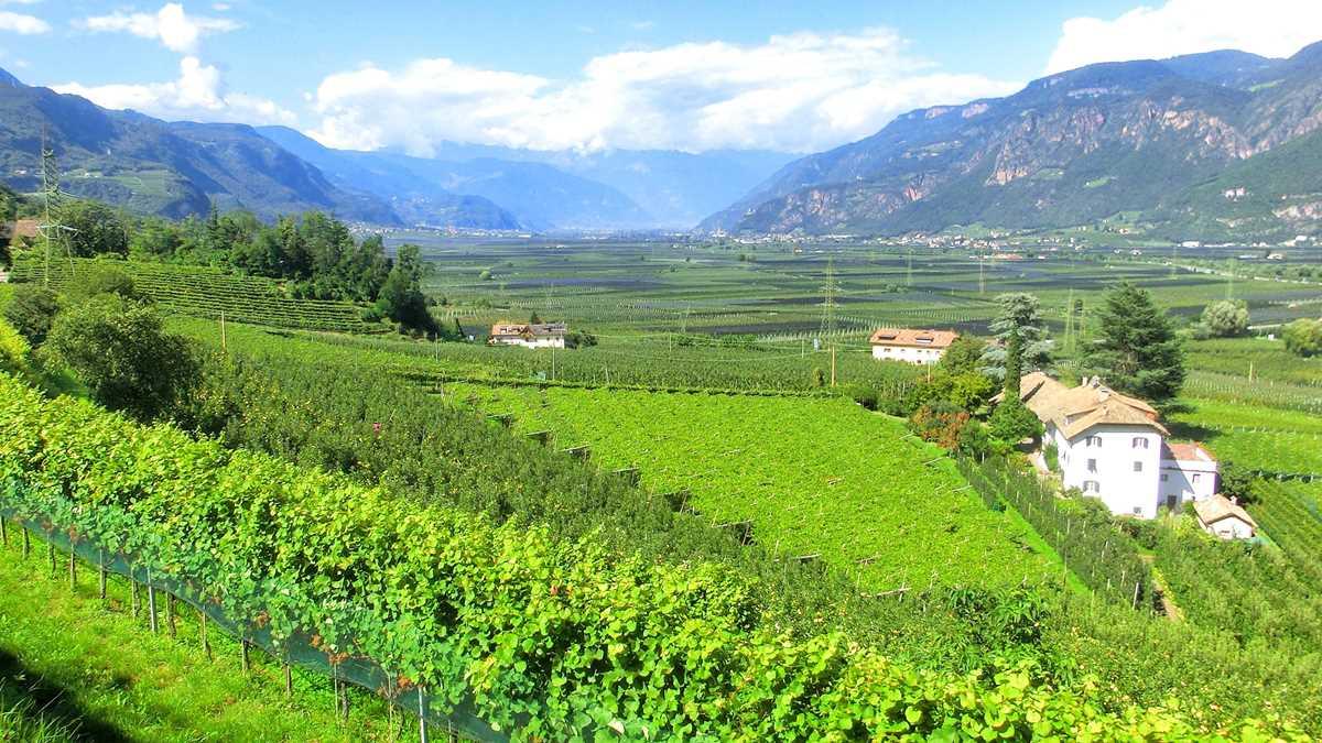 Blick auf die Gegend rund um den Kalterer See mit seinen zahlreichen Weinbergen