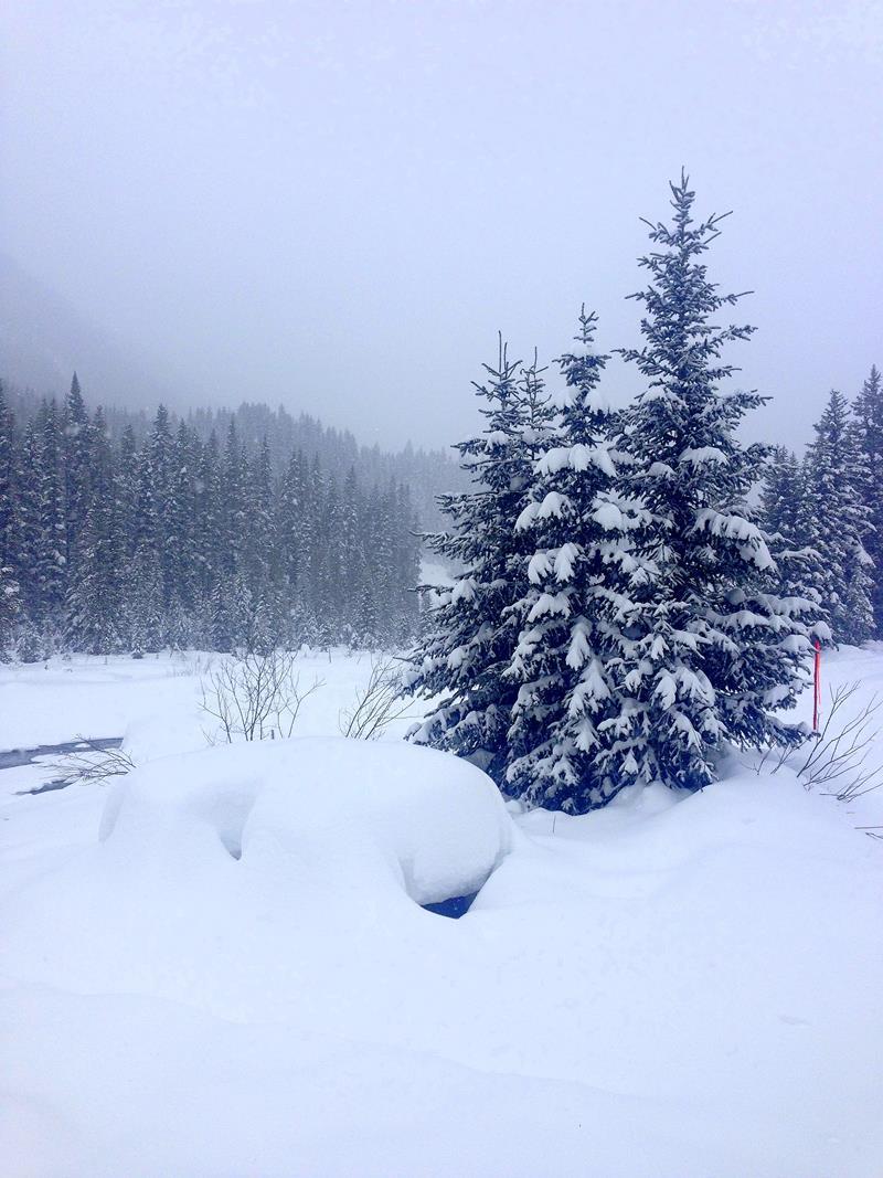 Winterlandschaft im Kootenay National Park in Kanada