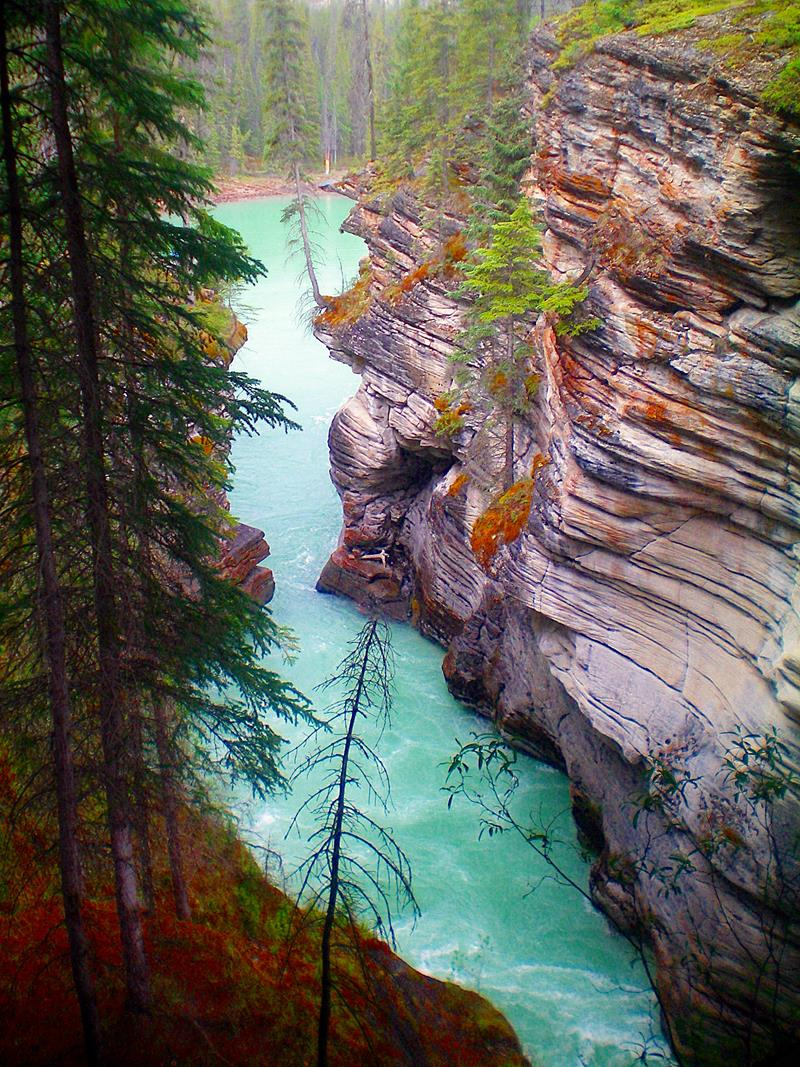 Der Athabasca River entlang des Icefields Parkway