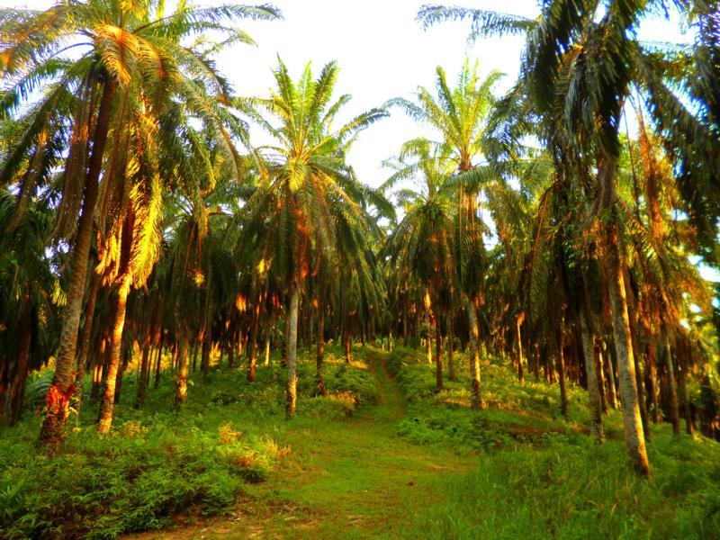 Nur 45 Minuten von Kuala Lumpur entfernt wartet mit dem Selangor State Park Natur pur