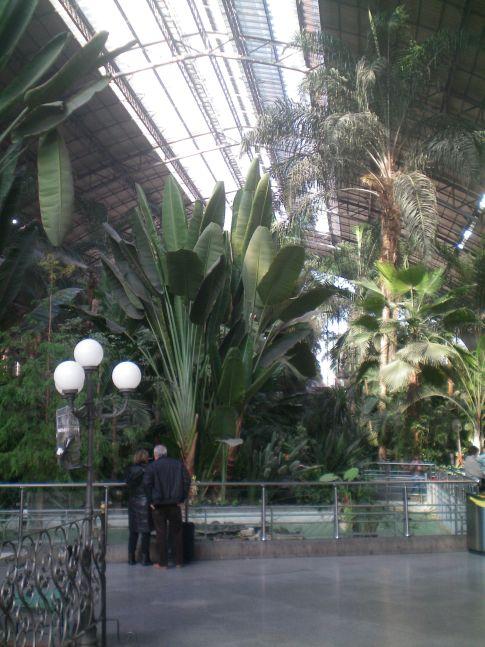 Der Bahnhof Atocha in Madrid: die alte Bahnhofshalle