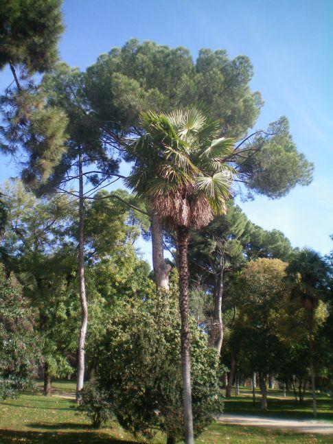 Palmen im Parque del Retiro