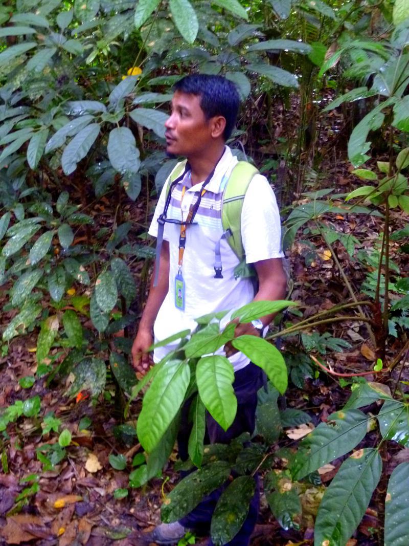 Unser Guide während der Wanderung im Taman Negara National Park