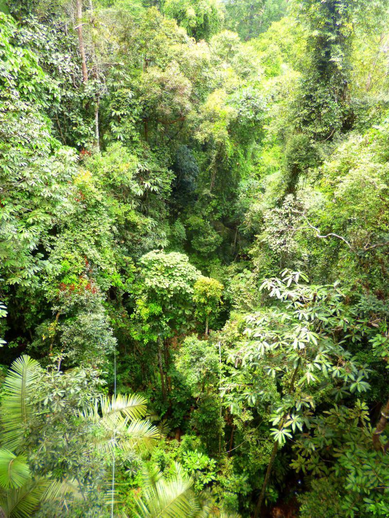Wanderungen und Tierbeobachtungen im Taman Negara National Park