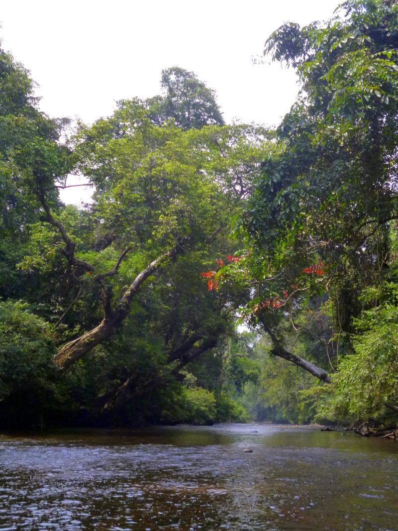 Dichter Regenwald im Taman Negara National Park