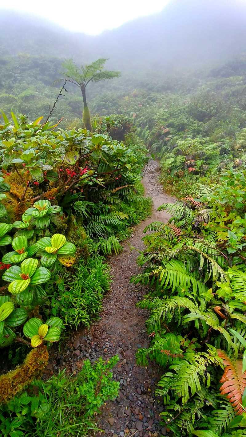 Der Wanderweg von Aileron hoch zum Montagne Pelée