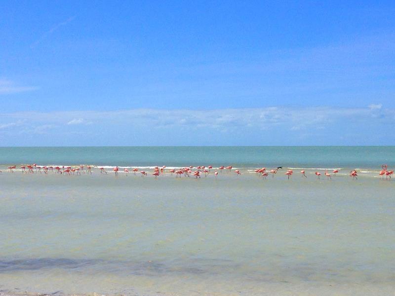 Flamingos sind eine der Hauptattraktionen der Isla Holbox