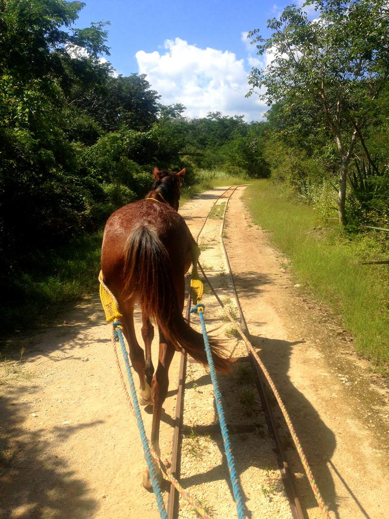 Die Cenotes Cuzama in der Nähe von Merida auf Yucatan