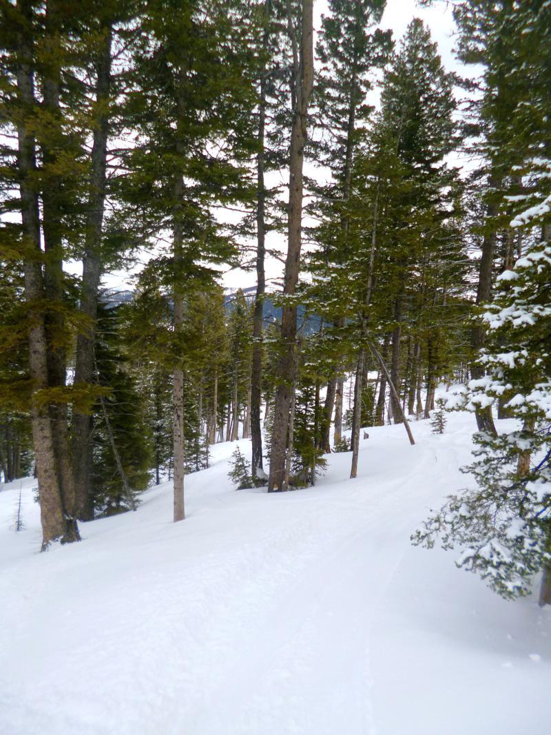 Perfektes Tree-Skiing Gelände im Bridge Bowl nahe Bozeman in Montana