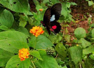 Taboga Island – die kleine bürgerliche Zufluchts-Insel für Panama City