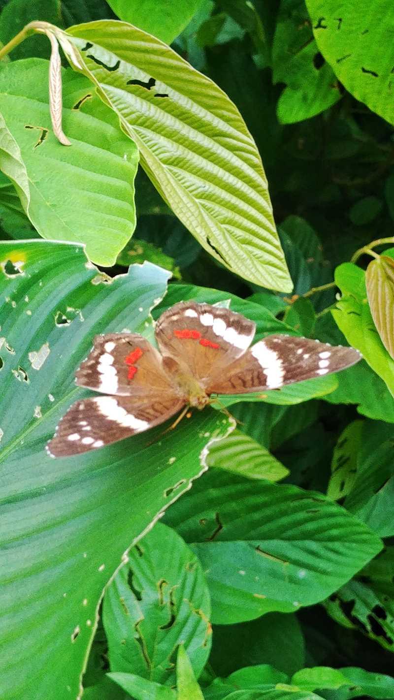 Der Soberania Nationalpark im Norden von Panama-Stadt