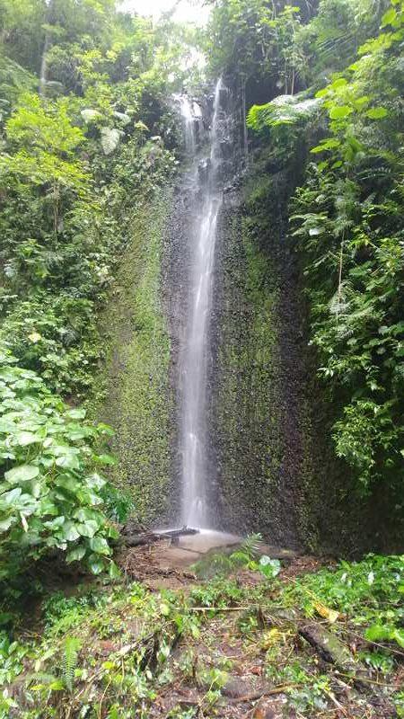 Besuch der Kaffeefarm Lerida in den Bergen von Boquete inkl. einem Wasserfall