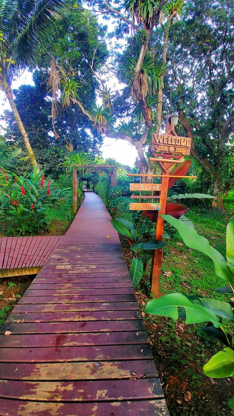 Die einzigartige Bambuda Lodge auf der Isla Solarte im Bocas del Toro Archipel in Panama